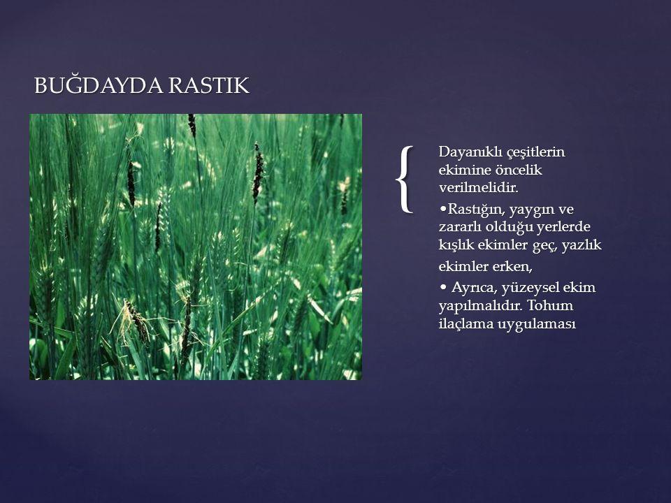 { Dayanıklı çeşitlerin ekimine öncelik verilmelidir. Rastığın, yaygın ve zararlı olduğu yerlerde kışlık ekimler geç, yazlık ekimler erken, Ayrıca, yüz