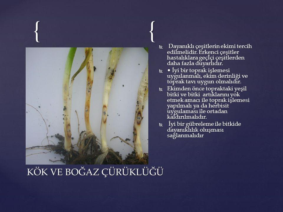{{  Dayanıklı çeşitlerin ekimi tercih edilmelidir. Erkenci çeşitler hastalıklara geçİçi çeşitlerden daha fazla duyarlıdır.  İyi bir toprak işlemesi