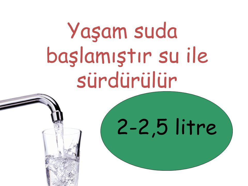 Yaşam suda başlamıştır su ile sürdürülür 2-2,5 litre