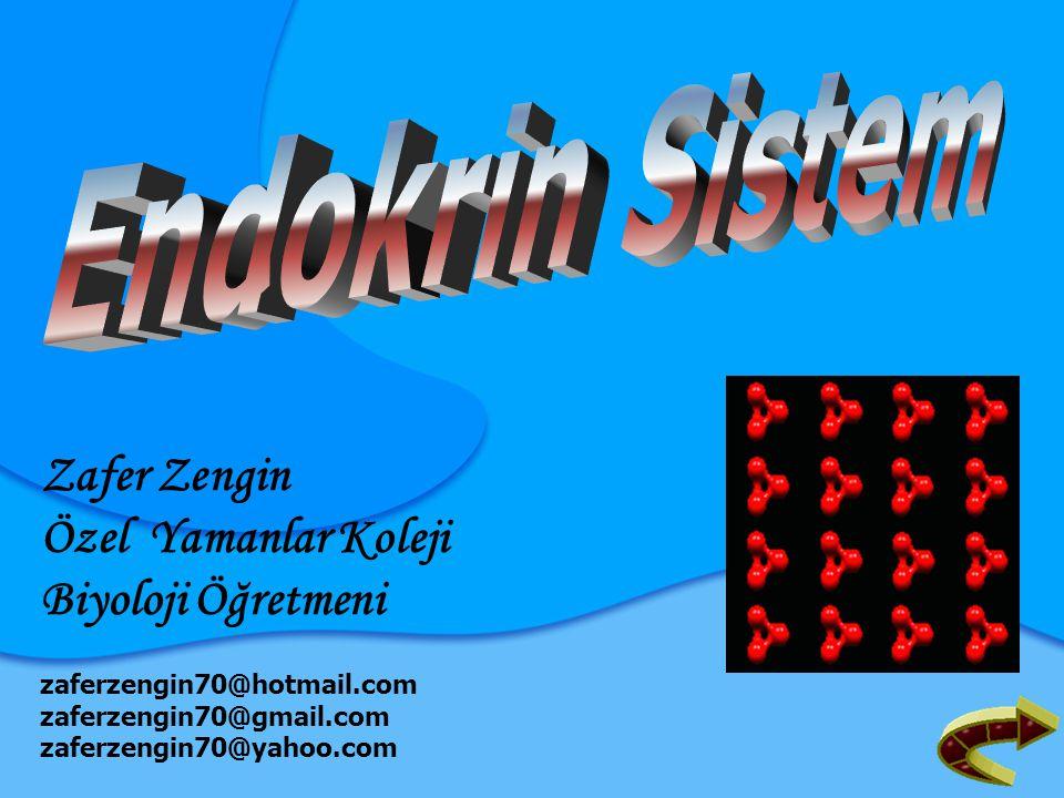 1.Hormonal Düzenleme Oksin Giberellin ENDOKRİN SİSTEM 2.