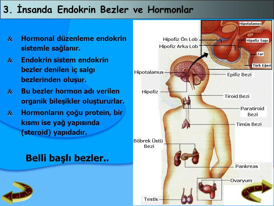 3. İnsanda Endokrin Bezler ve Hormonlar   Hormonal düzenleme endokrin sistemle sağlanır.   Endokrin sistem endokrin bezler denilen iç salgı bezler