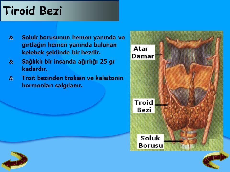 Tiroid Bezi   Soluk borusunun hemen yanında ve gırtlağın hemen yanında bulunan kelebek şeklinde bir bezdir.   Sağlıklı bir insanda ağırlığı 25 gr