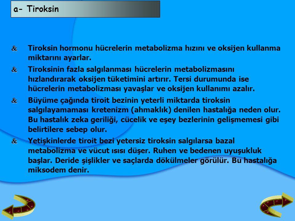 a- Tiroksin   Tiroksin hormonu hücrelerin metabolizma hızını ve oksijen kullanma miktarını ayarlar.   Tiroksinin fazla salgılanması hücrelerin met