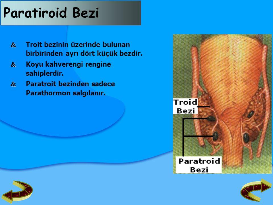 Paratiroid Bezi   Troit bezinin üzerinde bulunan birbirinden ayrı dört küçük bezdir.   Koyu kahverengi rengine sahiplerdir.   Paratroit bezinden