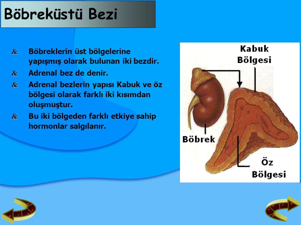 Böbreküstü Bezi   Böbreklerin üst bölgelerine yapışmış olarak bulunan iki bezdir.   Adrenal bez de denir.   Adrenal bezlerin yapısı Kabuk ve öz