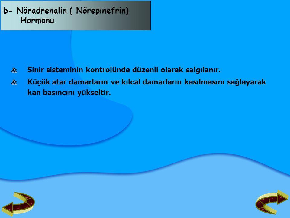 b- Nöradrenalin ( Nörepinefrin) Hormonu   Sinir sisteminin kontrolünde düzenli olarak salgılanır.   Küçük atar damarların ve kılcal damarların kas