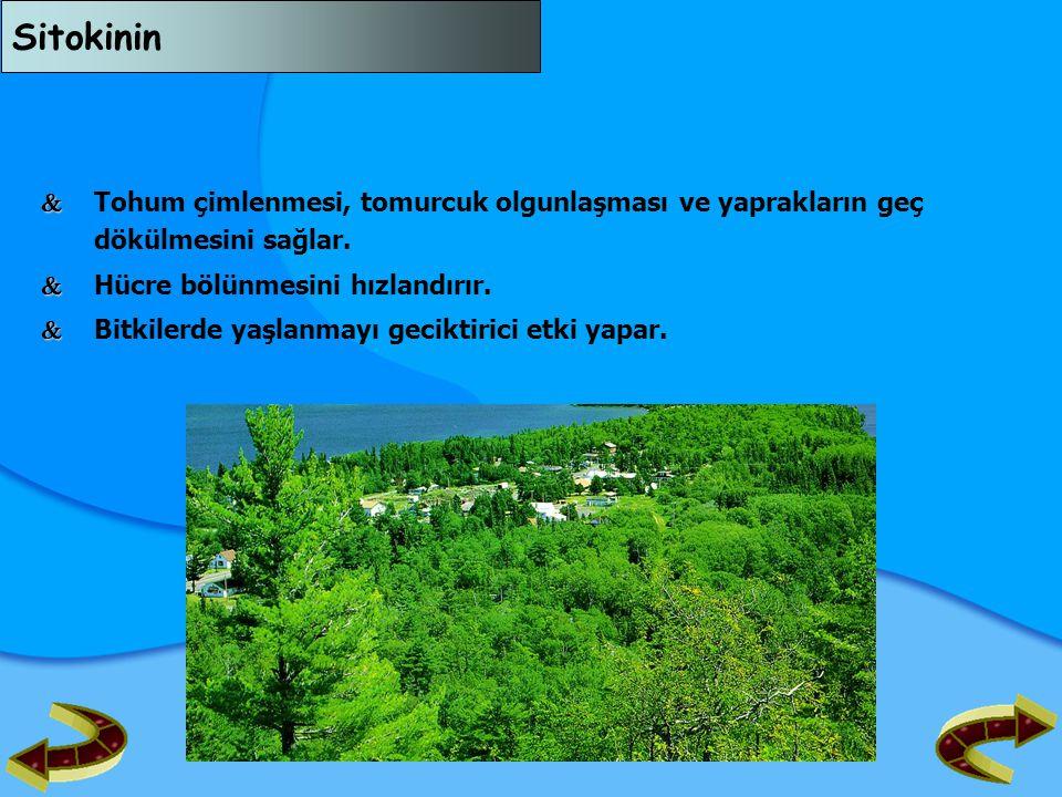 Böbreküstü Bezi   Böbreklerin üst bölgelerine yapışmış olarak bulunan iki bezdir.