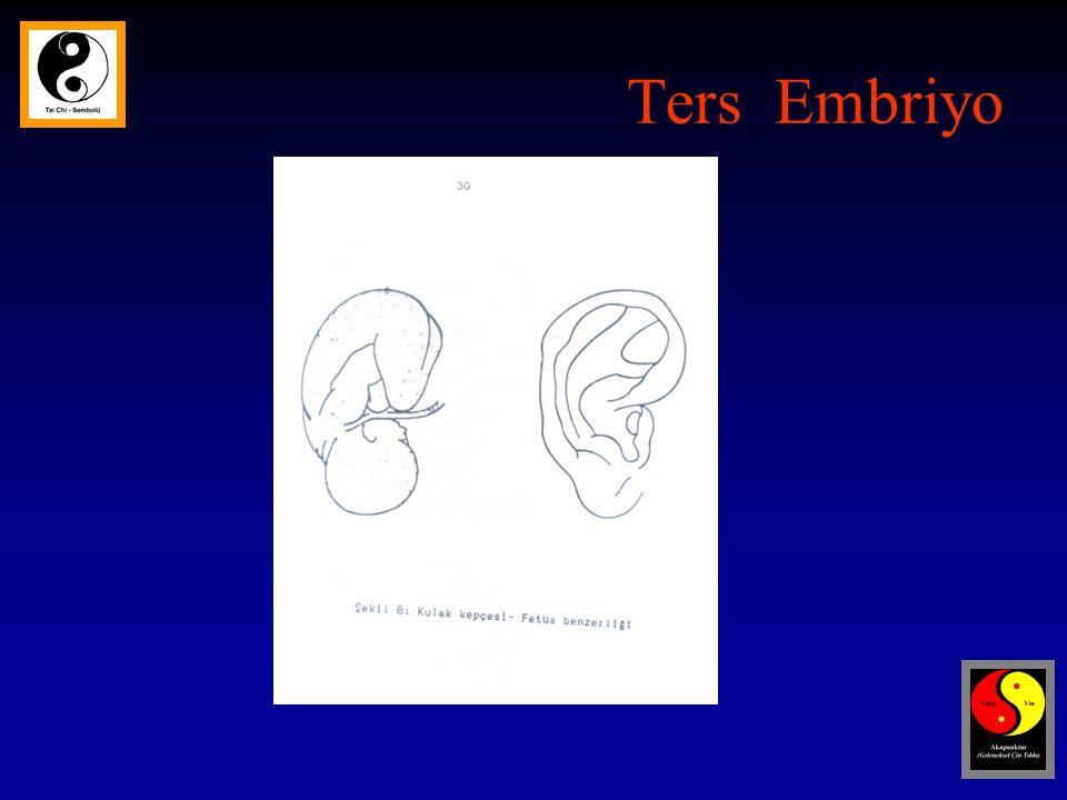 Ters Embriyo