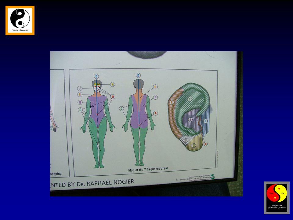 Akupunktur noktası  Yüksek sayıda serbest sinir ucu,sinir demeti,mast h, lenfatik, kapiller ve venül içerir.