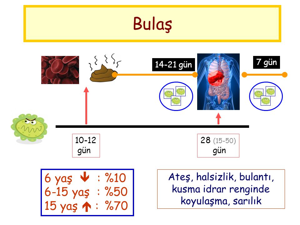 Bulaş 10-12 gün 28 (15-50) gün 14-21 gün 7 gün Ateş, halsizlik, bulantı, kusma idrar renginde koyulaşma, sarılık 6 yaş  :%10 6-15 yaş : %50 15 yaş 