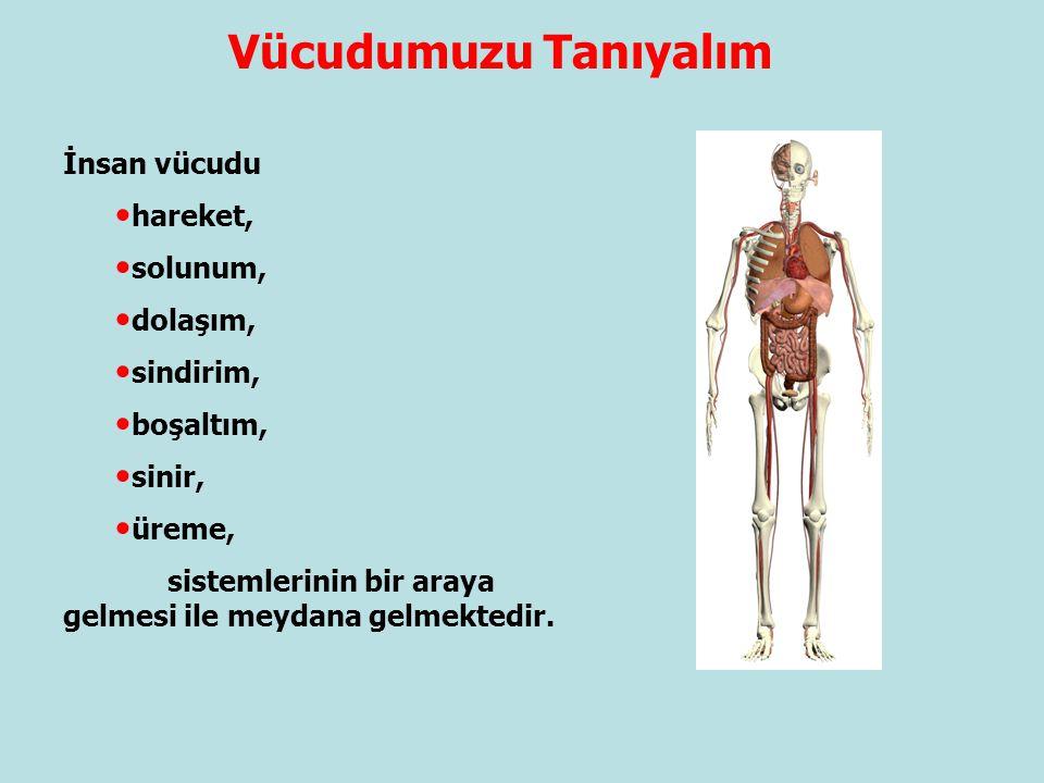 Vücudumuzu Tanıyalım İnsan vücudu hareket, solunum, dolaşım, sindirim, boşaltım, sinir, üreme, sistemlerinin bir araya gelmesi ile meydana gelmektedir