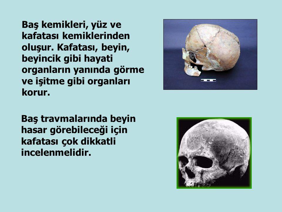 Baş kemikleri, yüz ve kafatası kemiklerinden oluşur. Kafatası, beyin, beyincik gibi hayati organların yanında görme ve işitme gibi organları korur. Ba