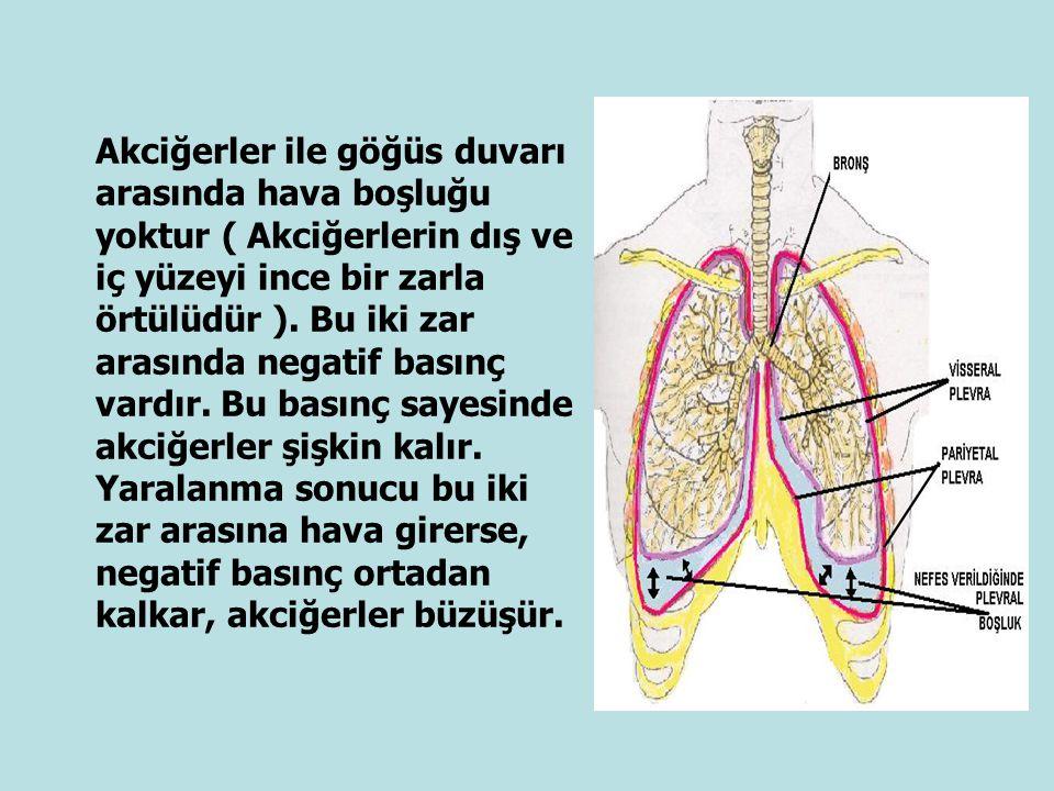 Akciğerler ile göğüs duvarı arasında hava boşluğu yoktur ( Akciğerlerin dış ve iç yüzeyi ince bir zarla örtülüdür ). Bu iki zar arasında negatif basın