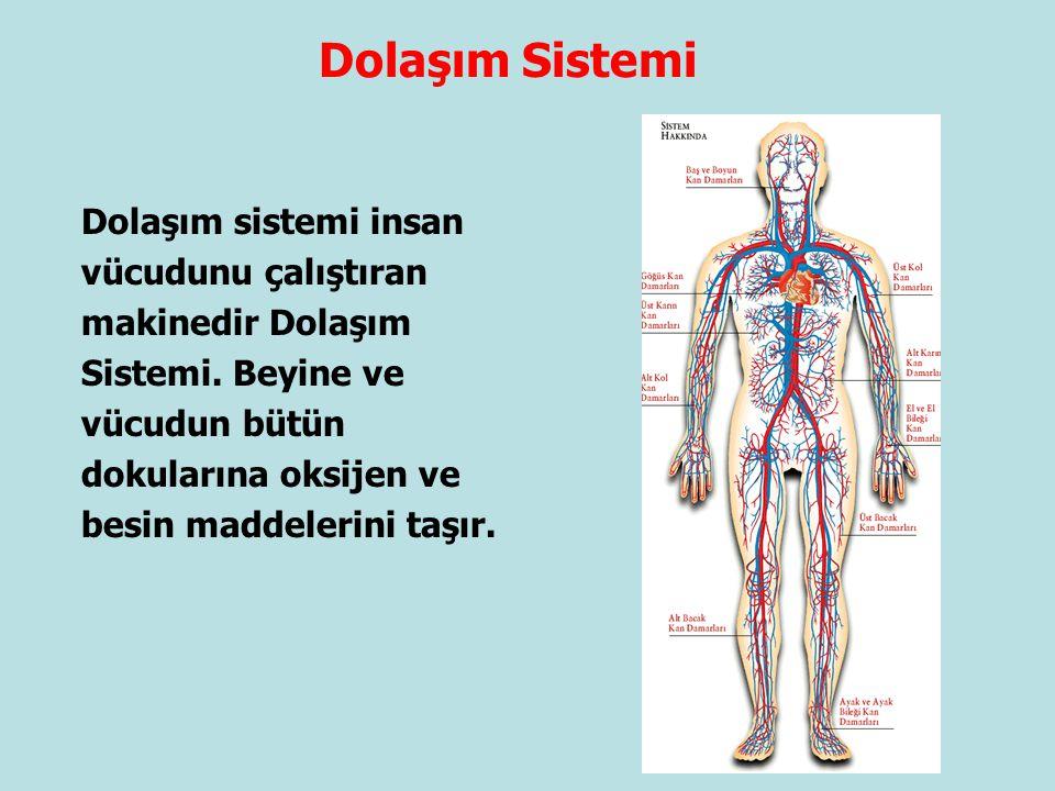 Dolaşım Sistemi Dolaşım sistemi insan vücudunu çalıştıran makinedir Dolaşım Sistemi. Beyine ve vücudun bütün dokularına oksijen ve besin maddelerini t