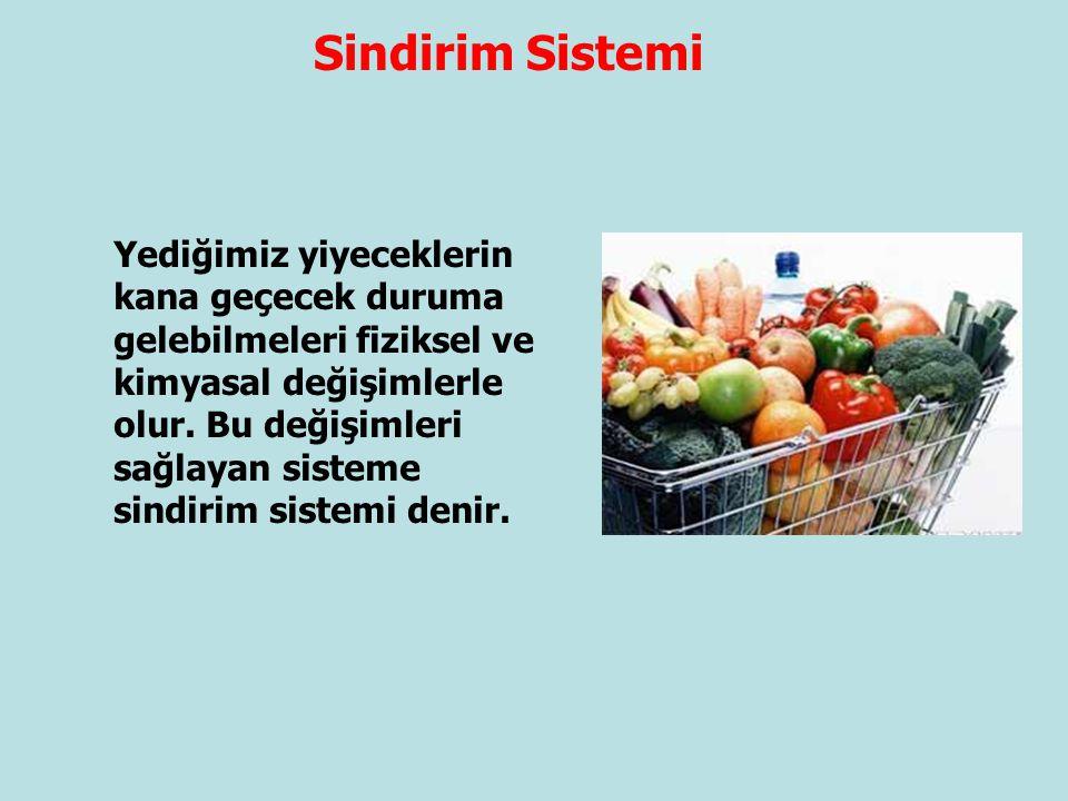 Sindirim Sistemi Yediğimiz yiyeceklerin kana geçecek duruma gelebilmeleri fiziksel ve kimyasal değişimlerle olur. Bu değişimleri sağlayan sisteme sind