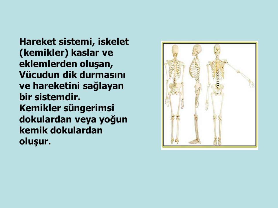 Hareket sistemi, iskelet (kemikler) kaslar ve eklemlerden oluşan, Vücudun dik durmasını ve hareketini sağlayan bir sistemdir. Kemikler süngerimsi doku