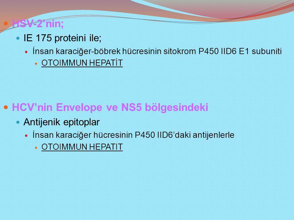 HSV-2'nin; IE 175 proteini ile; İnsan karaciğer-böbrek hücresinin sitokrom P450 IID6 E1 subuniti OTOIMMUN HEPATİT HCV'nin Envelope ve NS5 bölgesindeki Antijenik epitoplar İnsan karaciğer hücresinin P450 IID6'daki antijenlerle OTOIMMUN HEPATIT