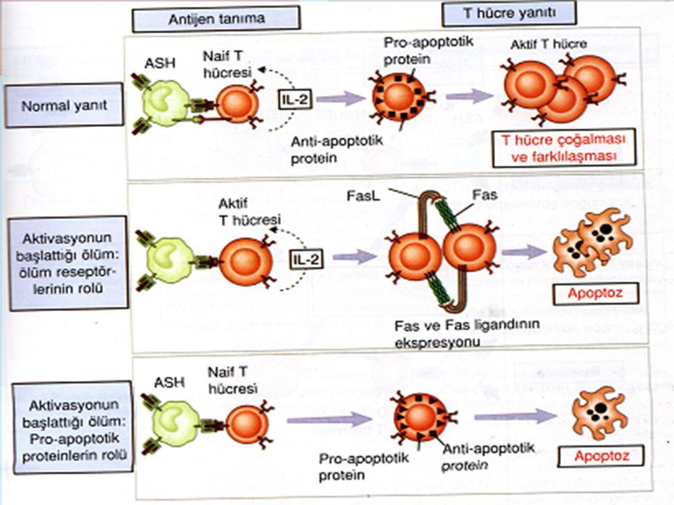 HIV Env Proteinleri İnsan HLA Klas II HIV ENF Coxsaki B4 İnsan kalp kası Kalp Hastalığı Coxsaki B4 P2-C; İnsan Pankreas Beta Hücrelerinin yüzeyindekiGlutami asit dekarboksilaz (GAD)65 Tip I DİABET Kızamık, Kabakulak, V.zoster; İnsan MSS'deki myelin benzeri protein ANSEFALOPATİ HAV ve EBV'de Asialoglukoprotein antijeni ile; Karaciğere spesifik membran antijeni Asialoglukoprotein OTOİMMUN HEPATİT