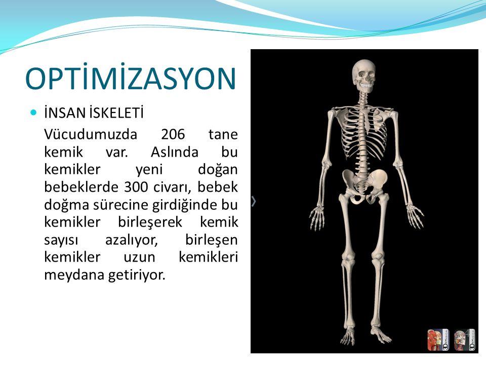 OPTİMİZASYON İNSAN İSKELETİ Vücudumuzda 206 tane kemik var. Aslında bu kemikler yeni doğan bebeklerde 300 civarı, bebek doğma sürecine girdiğinde bu k
