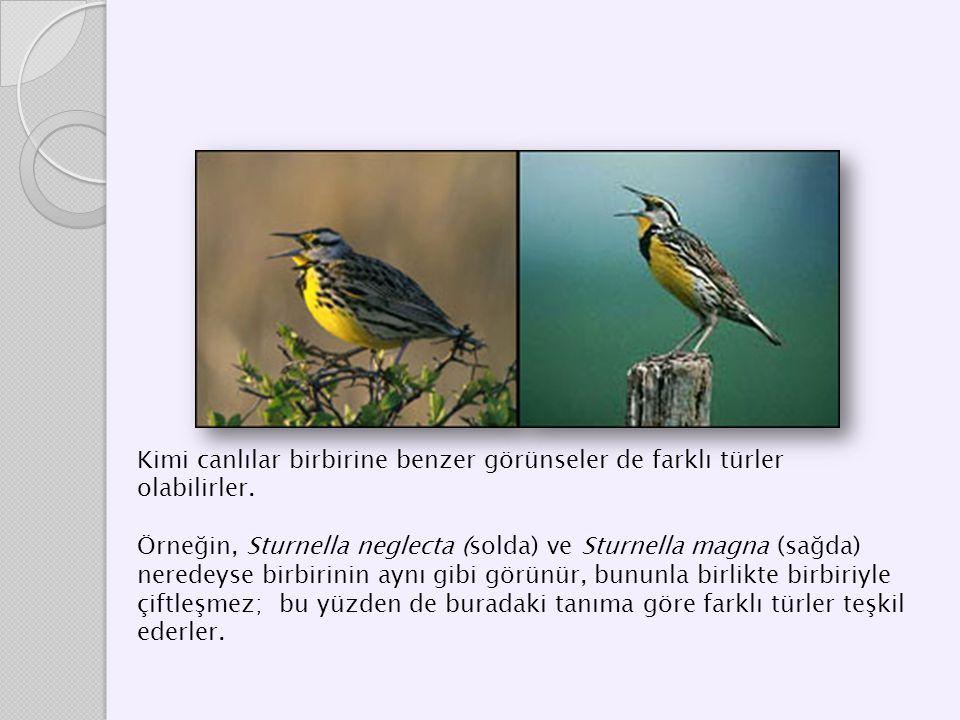 Kimi canlılar birbirine benzer görünseler de farklı türler olabilirler. Örneğin, Sturnella neglecta (solda) ve Sturnella magna (sağda) neredeyse birbi