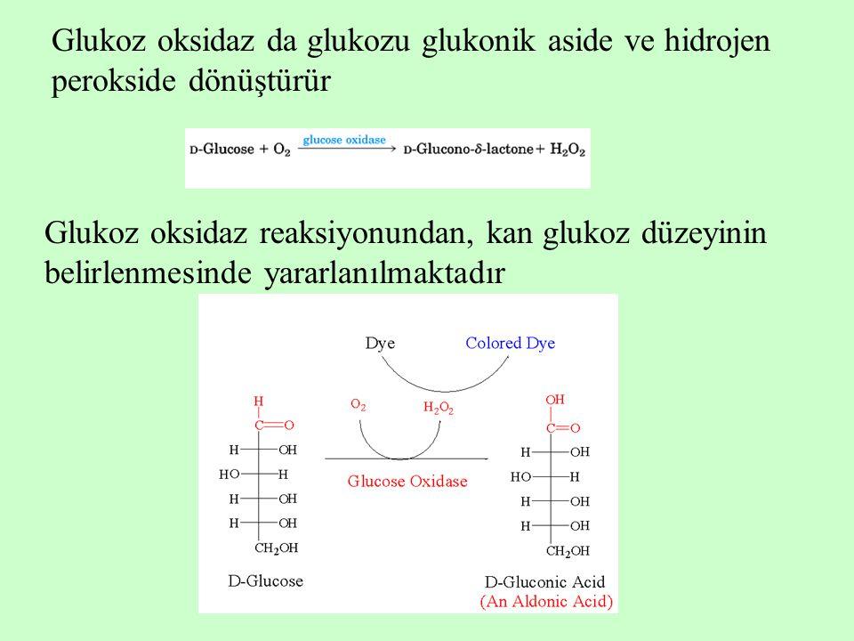 Glukoz oksidaz da glukozu glukonik aside ve hidrojen perokside dönüştürür Glukoz oksidaz reaksiyonundan, kan glukoz düzeyinin belirlenmesinde yararlan