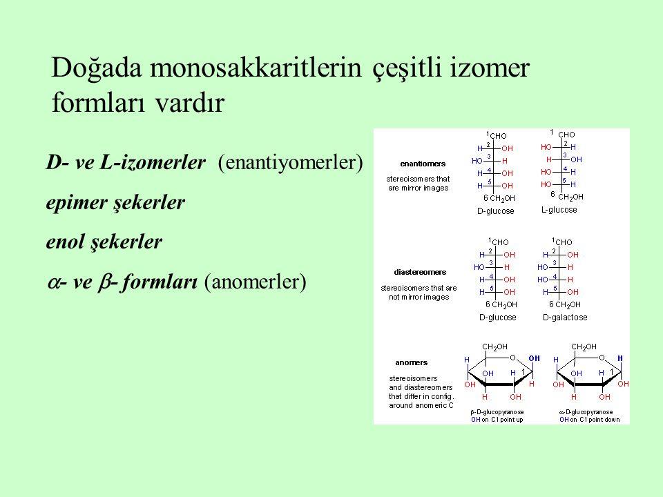 D- ve L-izomerler (enantiyomerler) epimer şekerler enol şekerler  - ve  - formları (anomerler) Doğada monosakkaritlerin çeşitli izomer formları vard