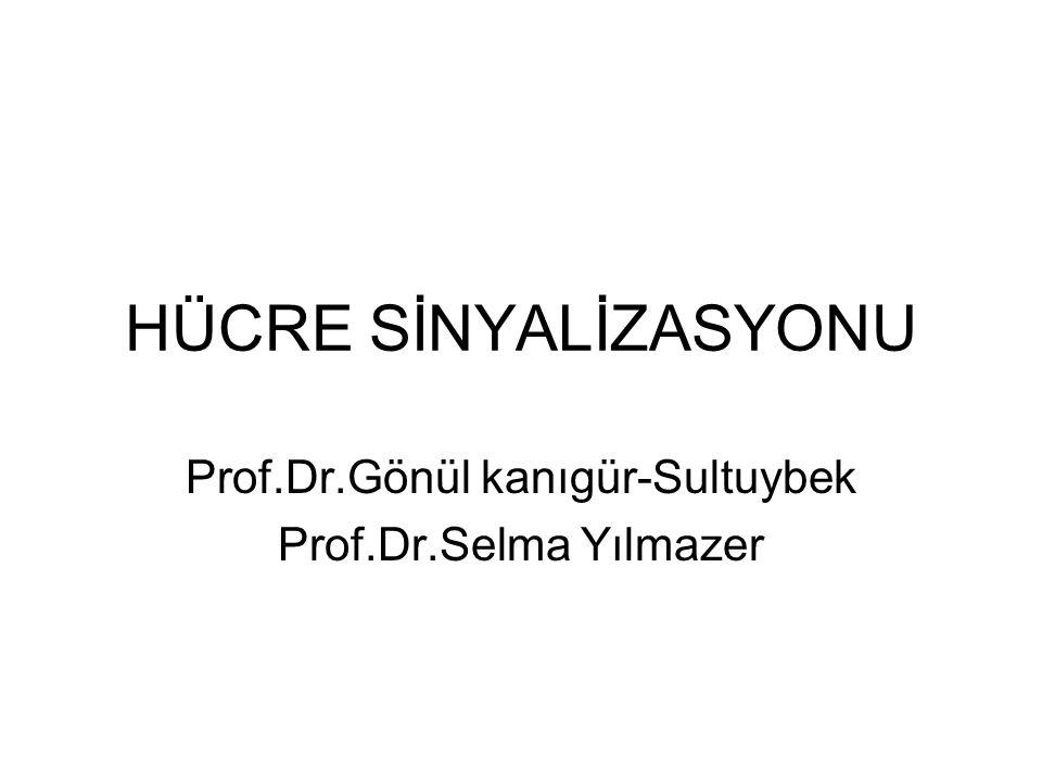 HÜCRE SİNYALİZASYONU Prof.Dr.Gönül kanıgür-Sultuybek Prof.Dr.Selma Yılmazer