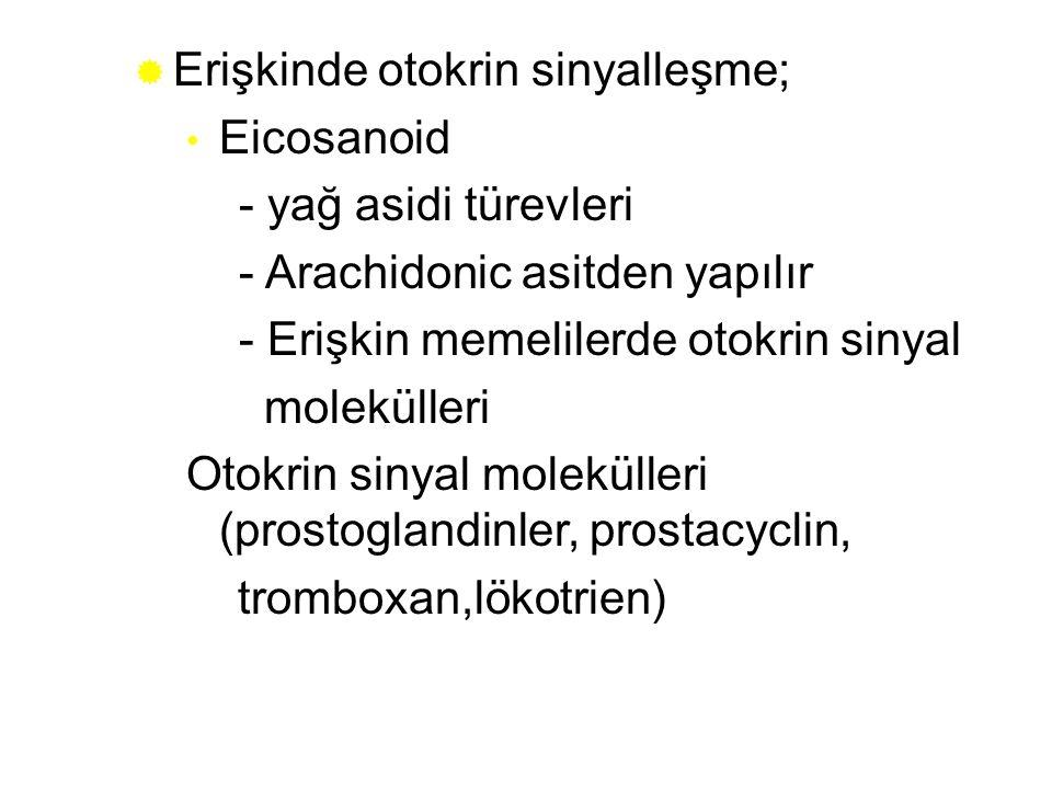  Erişkinde otokrin sinyalleşme; Eicosanoid - yağ asidi türevleri - Arachidonic asitden yapılır - Erişkin memelilerde otokrin sinyal molekülleri Otokr