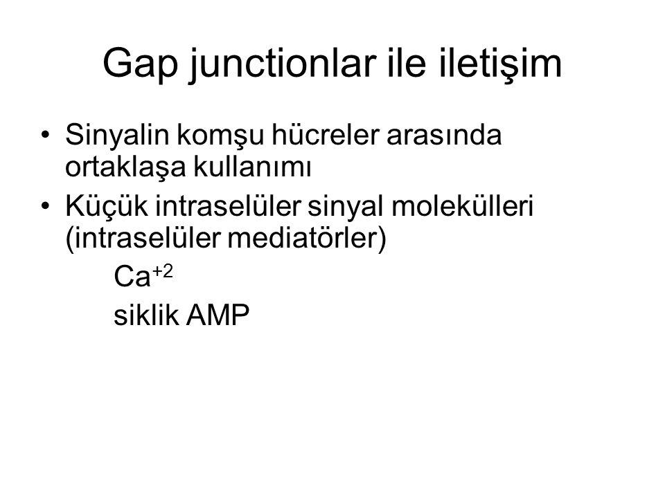 Gap junctionlar ile iletişim Sinyalin komşu hücreler arasında ortaklaşa kullanımı Küçük intraselüler sinyal molekülleri (intraselüler mediatörler) Ca