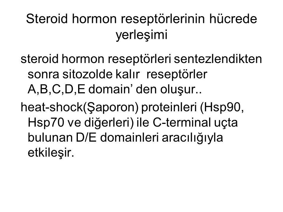 Steroid hormon reseptörlerinin hücrede yerleşimi steroid hormon reseptörleri sentezlendikten sonra sitozolde kalır reseptörler A,B,C,D,E domain' den o