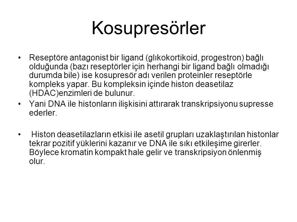 Kosupresörler Reseptöre antagonist bir ligand (glıkokortikoid, progestron) bağlı olduğunda (bazı reseptörler için herhangi bir ligand bağlı olmadığı d