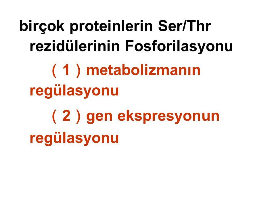 birçok proteinlerin Ser/Thr rezidülerinin Fosforilasyonu ( 1 ) metabolizmanın regülasyonu ( 2 ) gen ekspresyonun regülasyonu