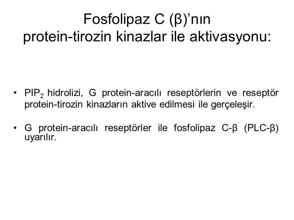 Fosfolipaz C (β)'nın protein-tirozin kinazlar ile aktivasyonu: PIP 2 hidrolizi, G protein-aracılı reseptörlerin ve reseptör protein-tirozin kinazların