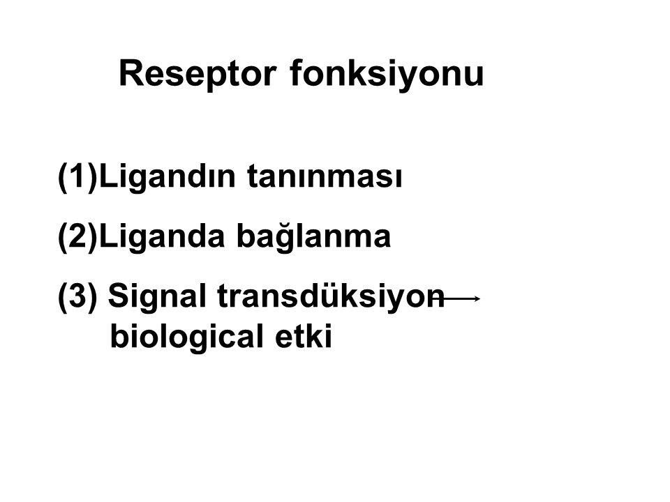 (1)Ligandın tanınması (2)Liganda bağlanma (3) Signal transdüksiyon biological etki Reseptor fonksiyonu