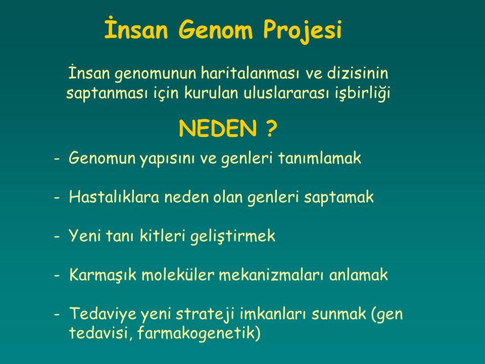 İnsan Genom Projesi İnsan genomunun haritalanması ve dizisinin saptanması için kurulan uluslararası işbirliği NEDEN ? -Genomun yapısını ve genleri tan
