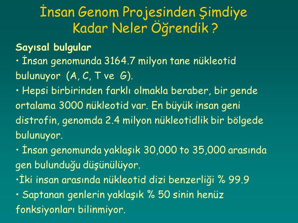 İnsan Genom Projesinden Şimdiye Kadar Neler Öğrendik ? Sayısal bulgular İnsan genomunda 3164.7 milyon tane nükleotid bulunuyor (A, C, T ve G). Hepsi b