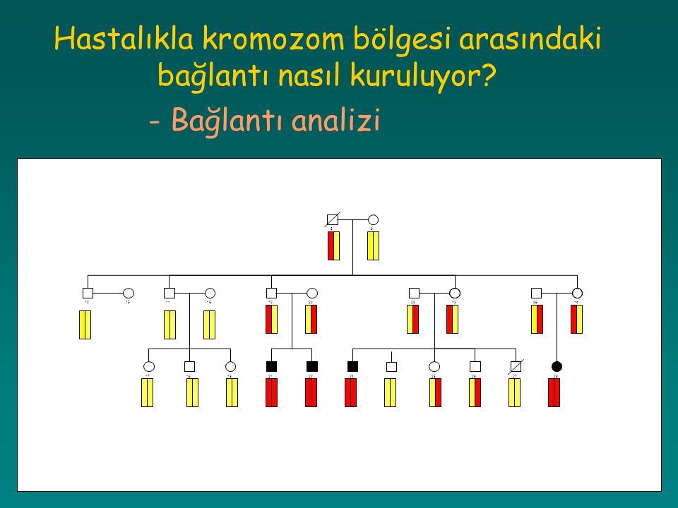 Hastalıkla kromozom bölgesi arasındaki bağlantı nasıl kuruluyor? - Bağlantı analizi