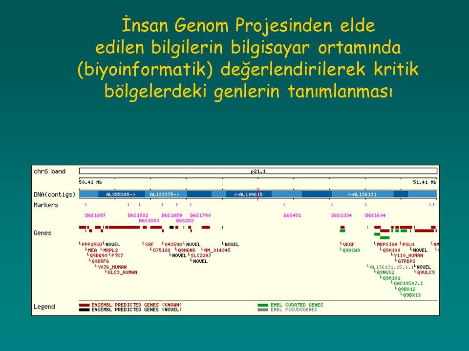 İnsan Genom Projesinden elde edilen bilgilerin bilgisayar ortamında (biyoinformatik) değerlendirilerek kritik bölgelerdeki genlerin tanımlanması
