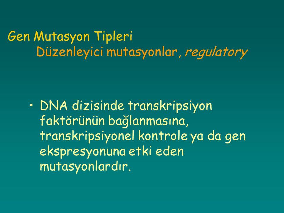 Gen Mutasyon Tipleri Düzenleyici mutasyonlar, regulatory DNA dizisinde transkripsiyon faktörünün bağlanmasına, transkripsiyonel kontrole ya da gen eks