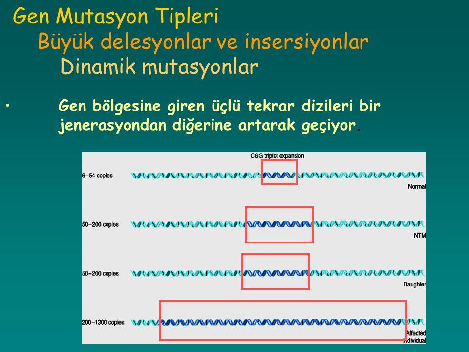 Gen Mutasyon Tipleri Büyük delesyonlar ve insersiyonlar Dinamik mutasyonlar Gen bölgesine giren üçlü tekrar dizileri bir jenerasyondan diğerine artara
