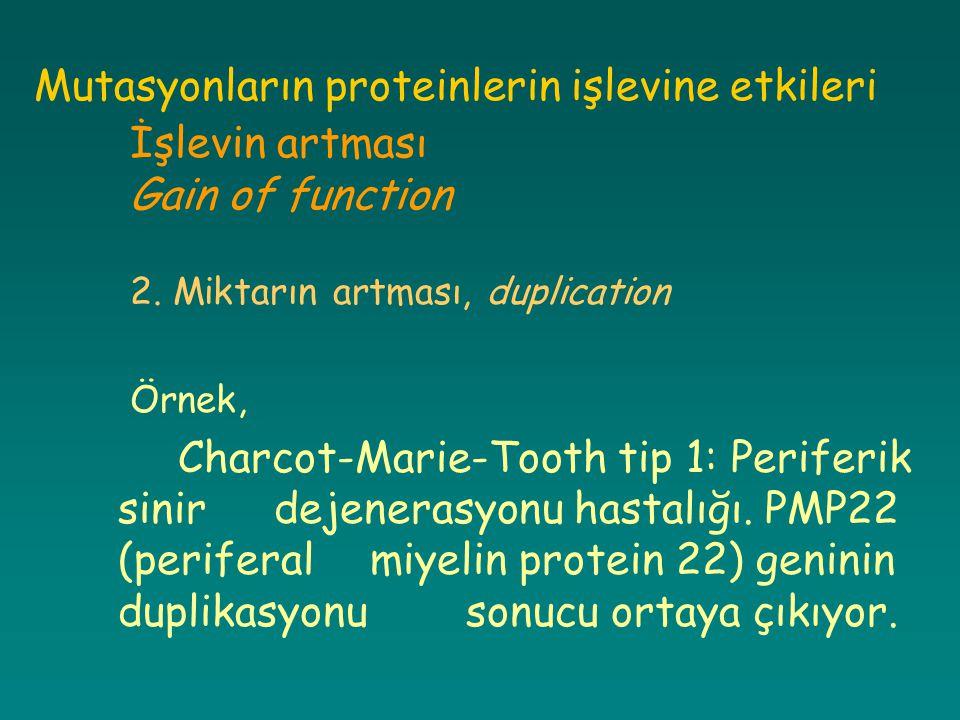 Mutasyonların proteinlerin işlevine etkileri İşlevin artması Gain of function 2. Miktarın artması, duplication Örnek, Charcot-Marie-Tooth tip 1: Perif