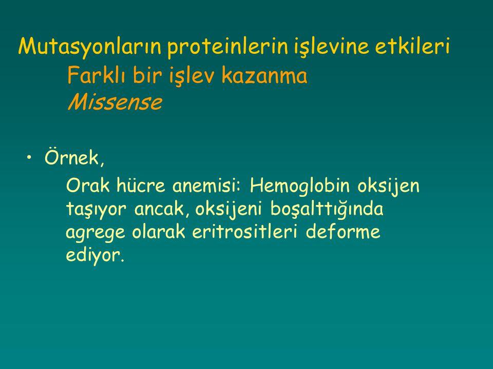 Mutasyonların proteinlerin işlevine etkileri Farklı bir işlev kazanma Missense Örnek, Orak hücre anemisi: Hemoglobin oksijen taşıyor ancak, oksijeni b