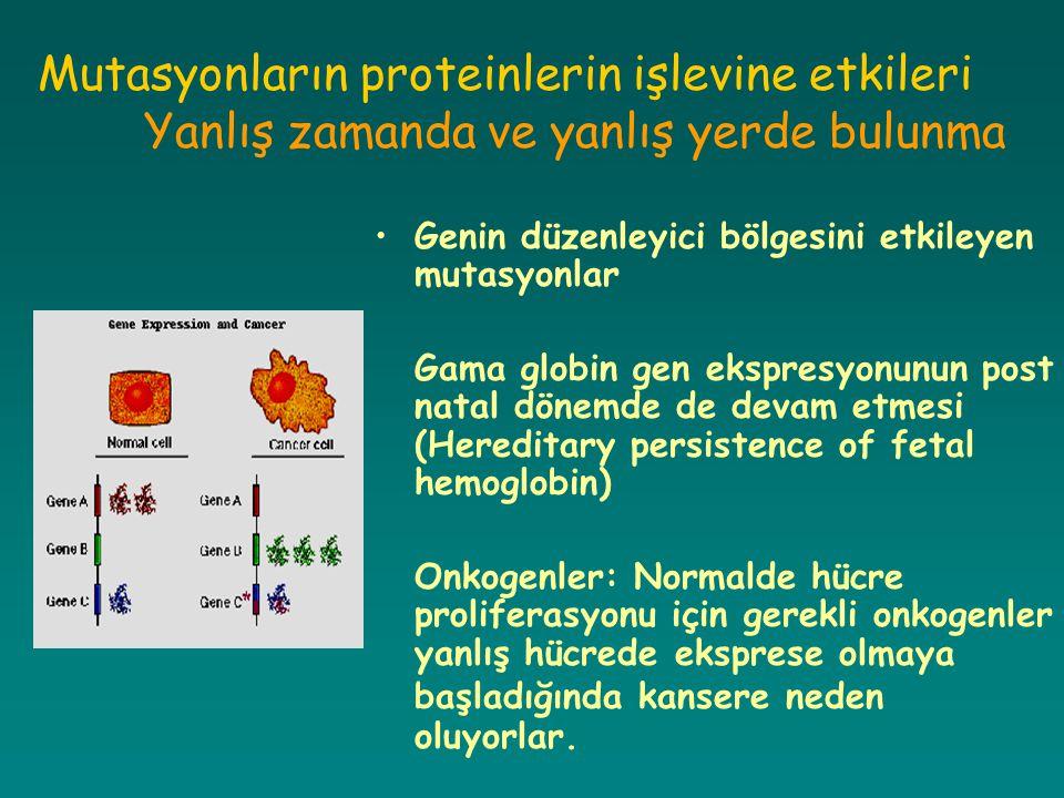 Mutasyonların proteinlerin işlevine etkileri Yanlış zamanda ve yanlış yerde bulunma Genin düzenleyici bölgesini etkileyen mutasyonlar Gama globin gen
