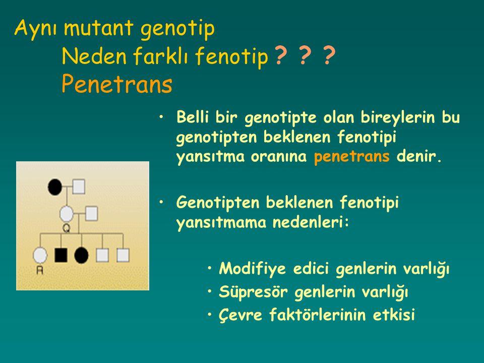 Aynı mutant genotip Neden farklı fenotip ? ? ? Penetrans Belli bir genotipte olan bireylerin bu genotipten beklenen fenotipi yansıtma oranına penetran