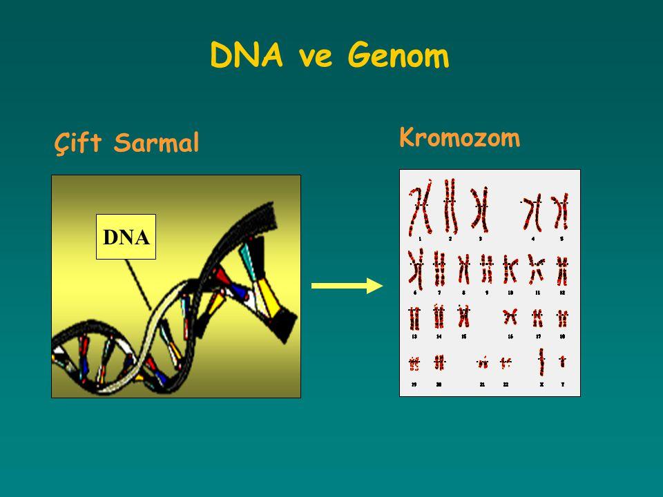 Gen Mutasyon Tipleri RNA kırpılma mutasyonları, splicing mRNA nın maturasyonunda önemli olan kırpılma noktalarını değiştiren mutasyonlardır.