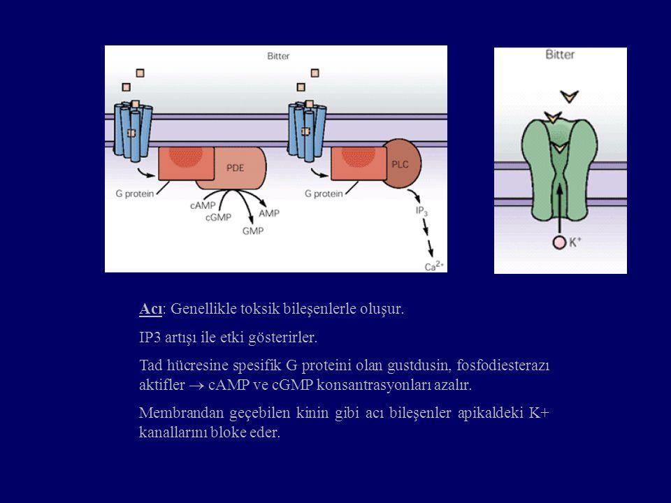 Acı: Genellikle toksik bileşenlerle oluşur. IP3 artışı ile etki gösterirler. Tad hücresine spesifik G proteini olan gustdusin, fosfodiesterazı aktifle