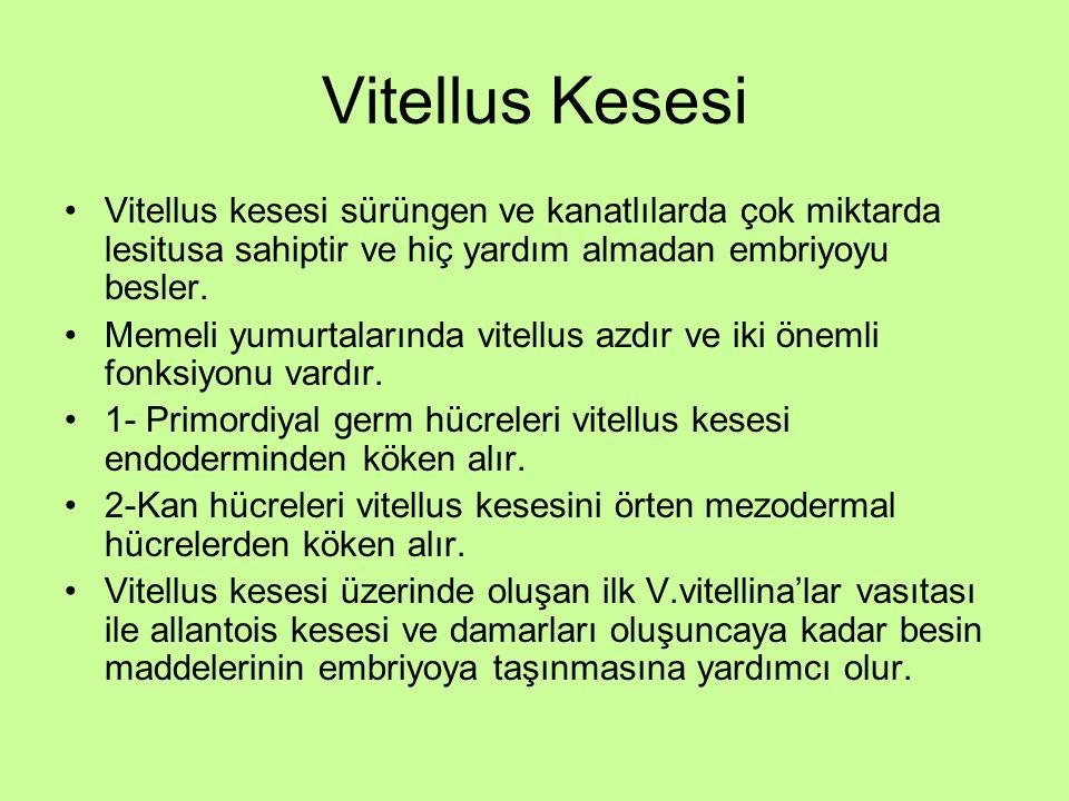 Vitellus Kesesi Vitellus kesesi sürüngen ve kanatlılarda çok miktarda lesitusa sahiptir ve hiç yardım almadan embriyoyu besler. Memeli yumurtalarında
