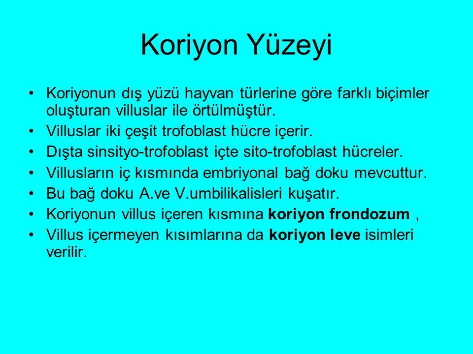 Koriyon Yüzeyi Koriyonun dış yüzü hayvan türlerine göre farklı biçimler oluşturan villuslar ile örtülmüştür.