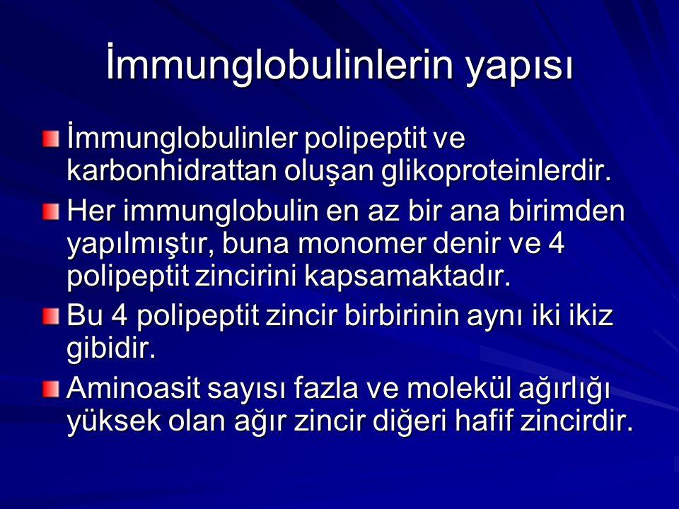 İmmunglobulinlerin yapısı İmmunglobulinler polipeptit ve karbonhidrattan oluşan glikoproteinlerdir. Her immunglobulin en az bir ana birimden yapılmışt