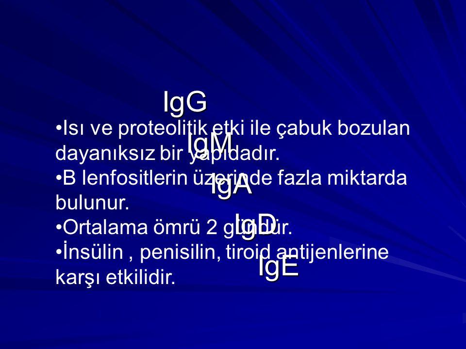 IgG IgG IgM IgM IgA IgA IgD IgD IgE IgE Isı ve proteolitik etki ile çabuk bozulan dayanıksız bir yapıdadır. B lenfositlerin üzerinde fazla miktarda bu